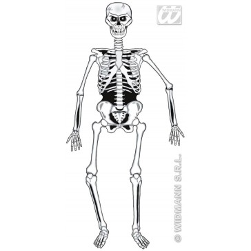 skelet decoratie, 140cm