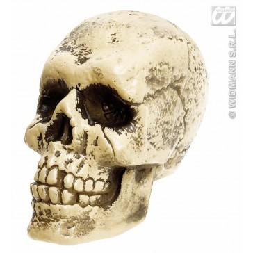 schedel levensgroot