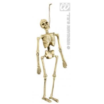 skelet 40cm